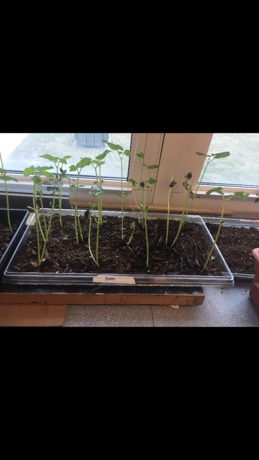 Environmental club planting for the spring