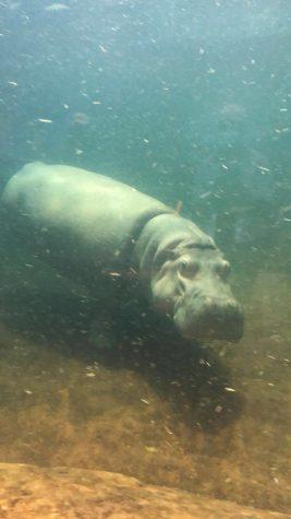 Adventures at the Adventure Aquarium